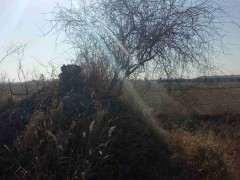 坟地上的野生枸杞下山桩 可以挖吗 图片