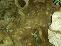 怎么截桩水培的枸杞下山桩 图片