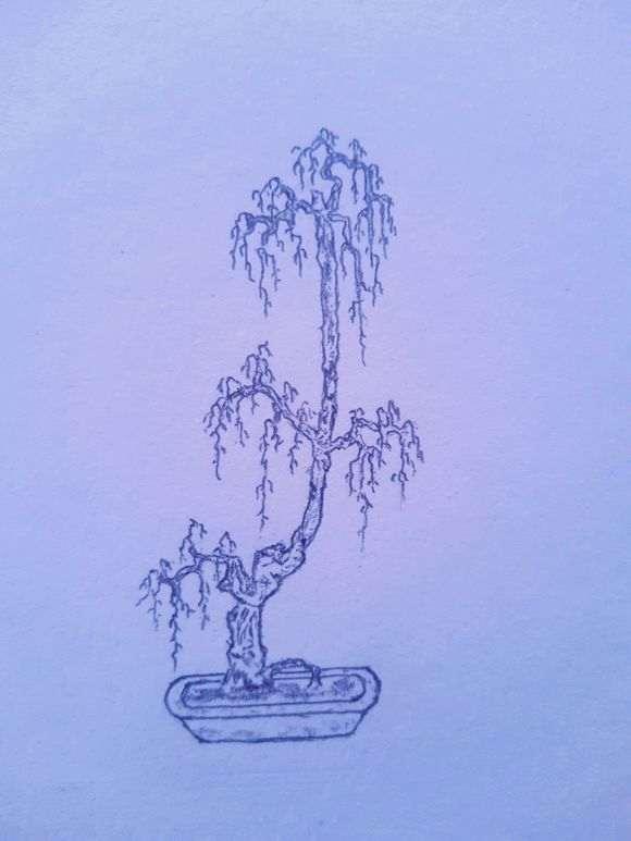 垂柳式枸杞下山桩造型设计图 图片