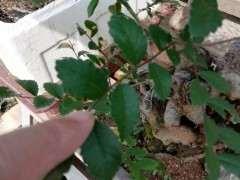 这个是什么榆树下山桩 如何造型 图片