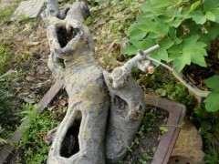 为什么榔榆下山桩有型的太少了 图片