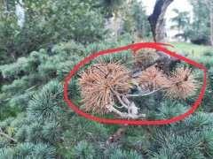 松树下山桩在夏季失水是什么样子 图片