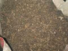 柏树下山桩怎么用腐叶土种植的方法 图片