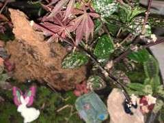 红枫下山桩底下的侧枝可以剪掉吗 图片