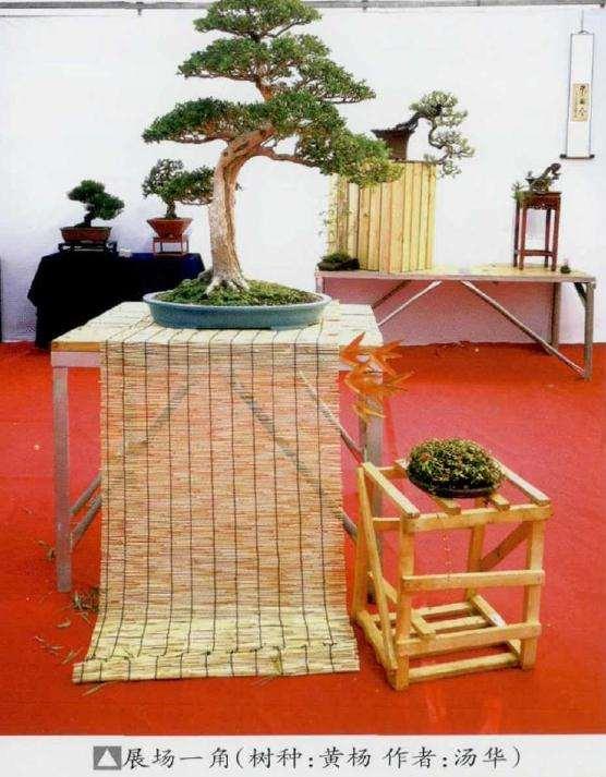 浅谈树冠盆景怎么创作的方法 图片