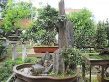 海南省花协成立盆景艺术专业委员会