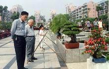 上海植物园盆景园蜡梅提前开花