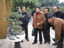 """文化主题墓区""""上海故事""""迎中国最大盆景"""