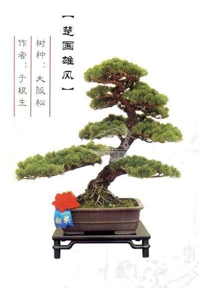 上海盆景展创作比赛