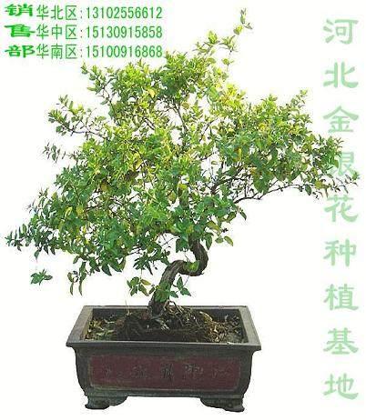河北省盆景雅石行业协会