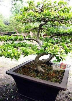 国际名流盆景在扬州