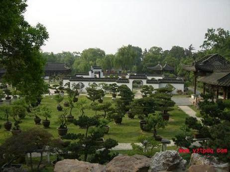 扬州盆景落户世博江苏馆