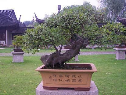 中国盆景展扬州参展作品
