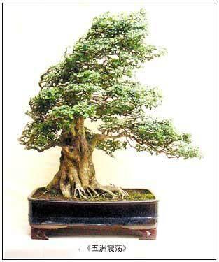 湖北省花木盆景协会绿化与观赏苗木分会成立