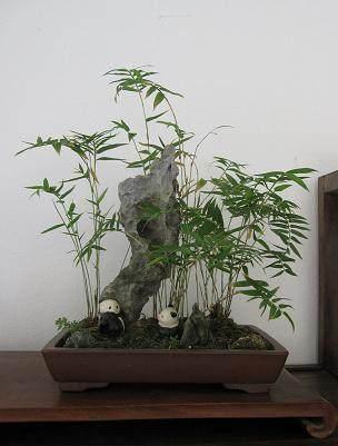 厦门盆景花卉协会