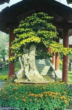 菊花常见病虫害的发生与防治