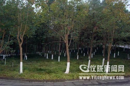 搞好林木冬管 减轻来年病虫危害
