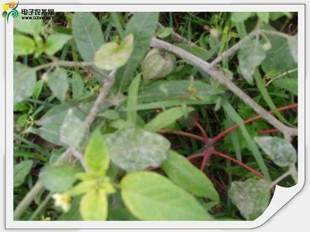 南天竹盆景怎么养护的5个方法