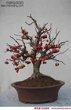 果树盆景快速成型的4个方法