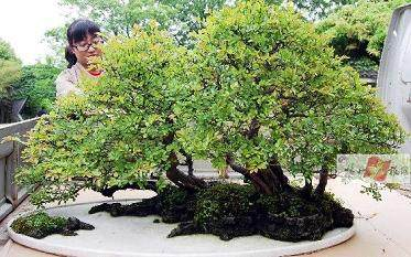 水旱盆景怎样生根制作的方法
