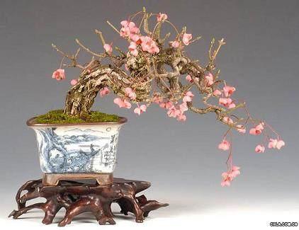 梅花盆景在春季发芽后的修剪方法 图片