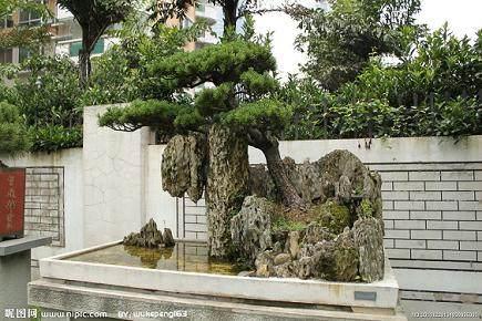 如何在树石盆景上种树?