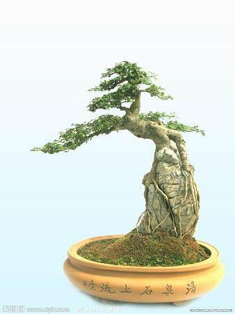 谈论树石盆景(一)