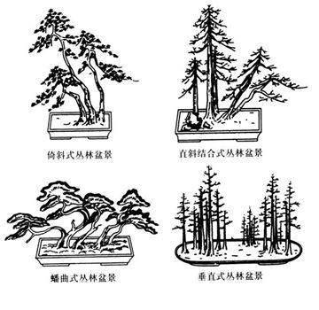 淺談叢林盆景