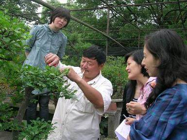 春季阳台树桩盆景怎么修剪发芽 图片