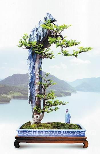 岭南盆景艺术与制作方法 图片