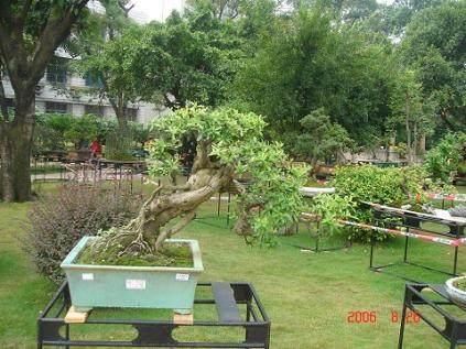 树桩盆景施肥三原则