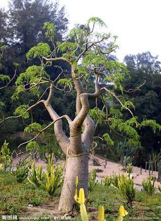 怎样给树木盆景翻盆换土?
