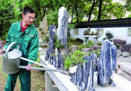 上海盆景名家创作的精品山水盆景