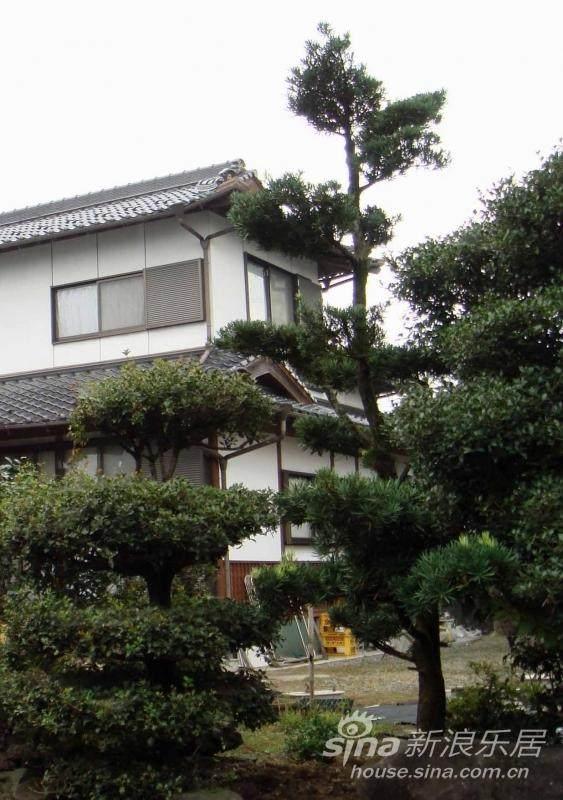 在别墅、庭院园林设计中借鉴日本的盆景松树