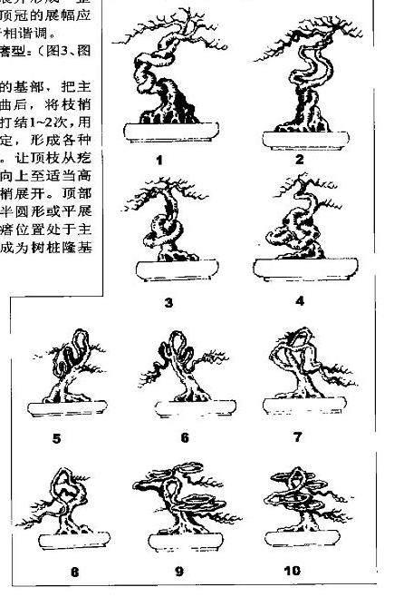 藤本盆景树木枝干的5种造型设计 图片