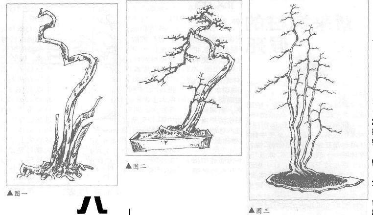 曾宪烨谈文人树盆景的造型设计 图片