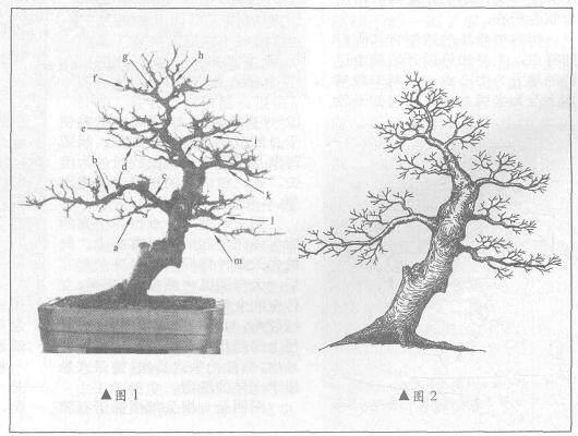 我是怎么帮助盆友改造盆景树