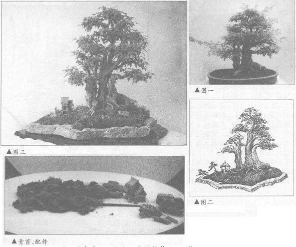 图解 三角枫盆景《春望》怎么制作设计