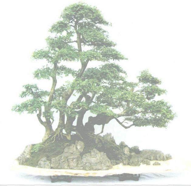 古郢楚都的魏文富盆景作品欣赏「图」