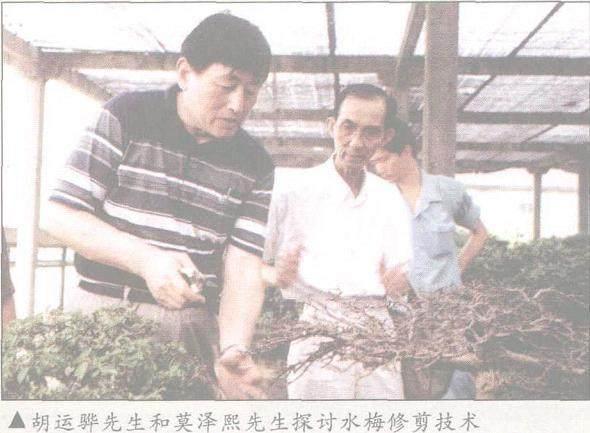 上海植物园积极推动中新盆景艺术交流[图]