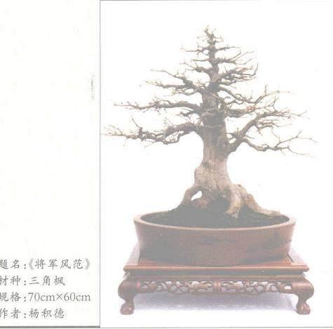 树桩盆景品味及艺术欣赏价值的高低