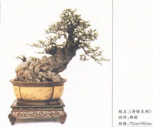 纵观王新水的盆景艺术作品 有以下几个特点
