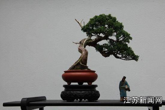 南京古林公园举办了全国首届网络会员微型盆景展