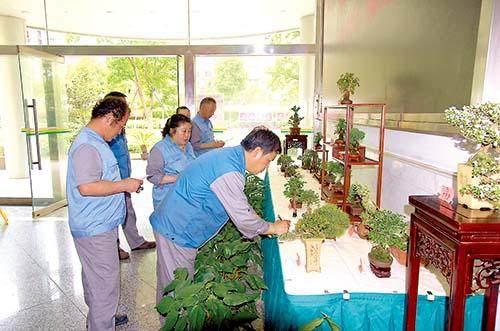 """上海烟草物流运输部举办了一场特别的""""微盆景""""展览"""