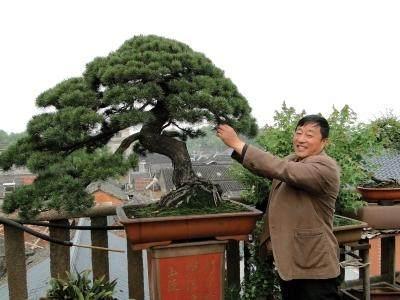 """扬州古城有一处""""天台盆景园"""""""