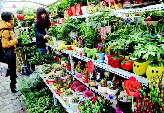 新疆:乌鲁木齐市盆景小植物俏销(图)
