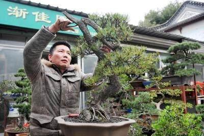 """扬州市区有个""""盆景茶吧"""""""
