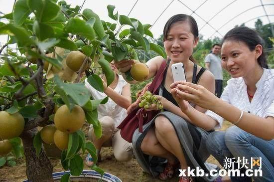 重庆市巫山县村民耗时3年研制推出水果盆景