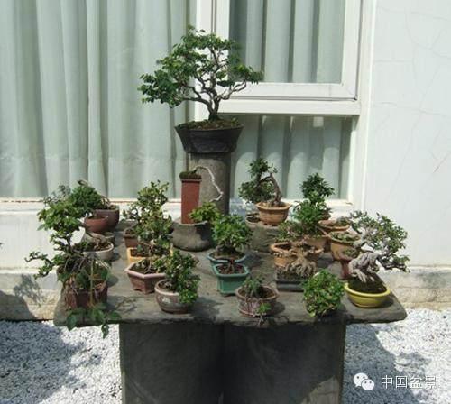 台北梁悦美教授私家盆景园欣赏