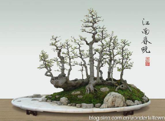 岭南盆景艺术怎么柳格造型的方法